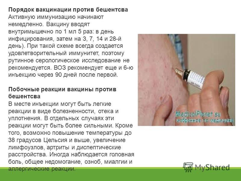 Порядок вакцинации против бешентсва Активную иммунизацию начинают немедленно. Вакцину вводят внутримышечно по 1 мл 5 раз: в день инфицирования, затем на 3, 7, 14 и 28-й день). При такой схеме всегда создается удовлетворительный иммунитет, поэтому рут