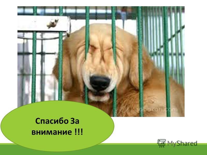 Бешенство животных курсовая работа 4979