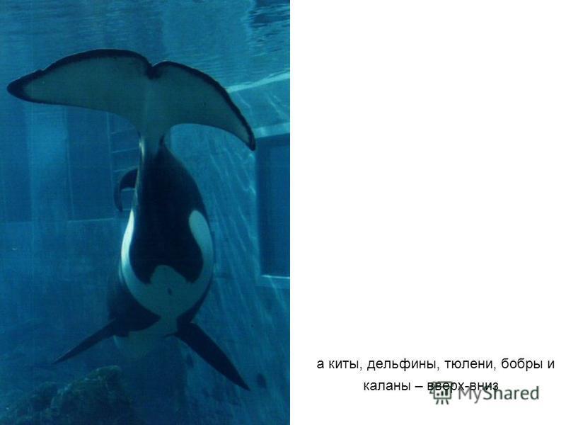 а киты, дельфины, тюлени, бобры и каланы – вверх-вниз