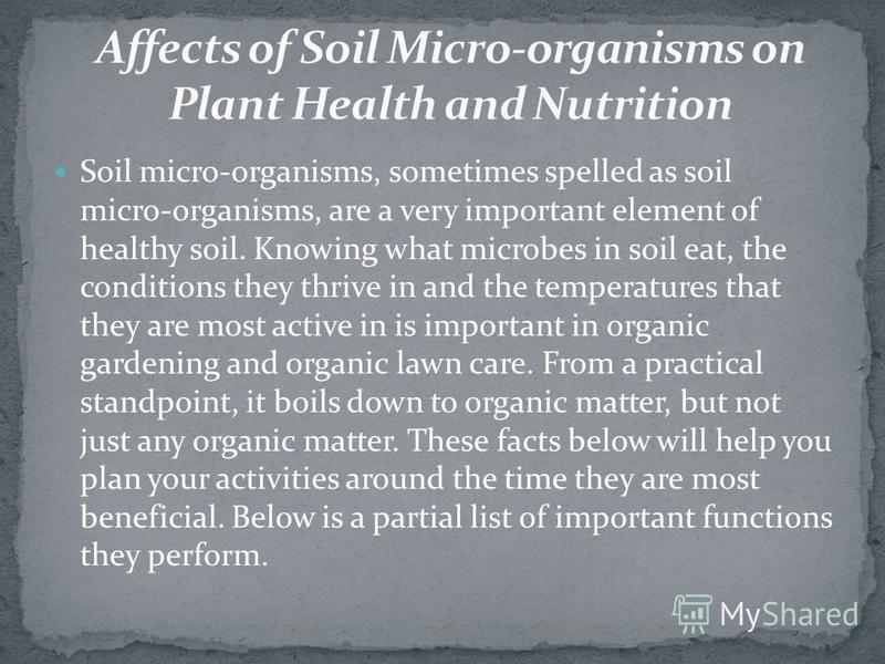 Soil micro-organisms, sometimes spelled as soil micro-organisms, are a very important element of healthy soil. Knowing what microbes in soil eat, the conditions they thrive in and the temperatures that they are most active in is important in organic