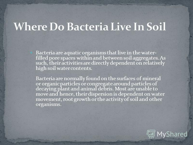 Bacteria are aquatic organisms that live in the water- filled pore spaces within and between soil aggregates. As such, their activities are directly dependent on relatively high soil water contents. Bacteria are normally found on the surfaces of mine