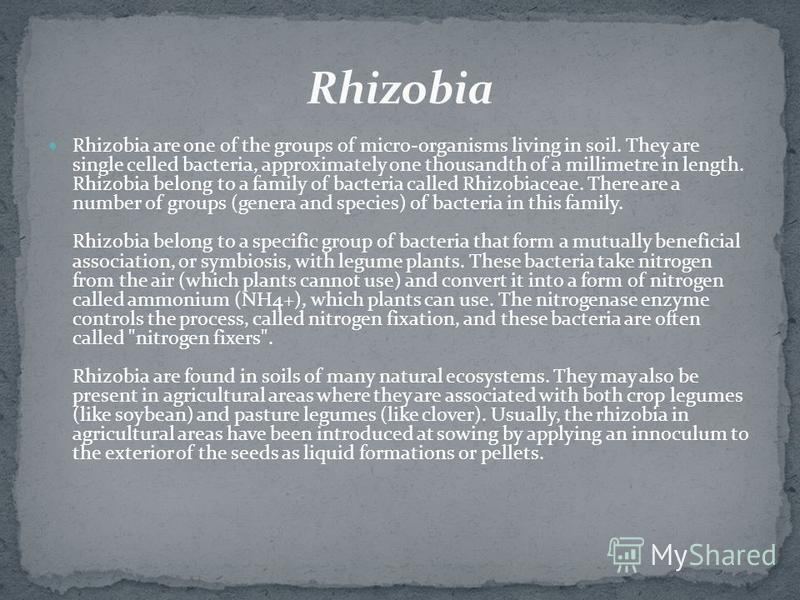 Rhizobia are one of the groups of micro-organisms living in soil. They are single celled bacteria, approximately one thousandth of a millimetre in length. Rhizobia belong to a family of bacteria called Rhizobiaceae. There are a number of groups (gene