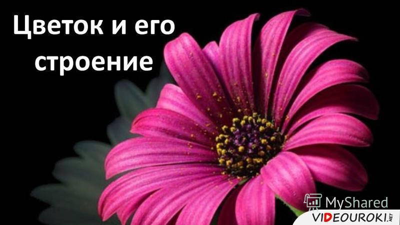 Цветок и его строение