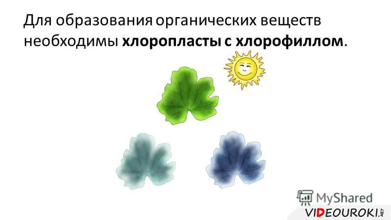 Для образования органических веществ необходимы хлоропласты с хлорофиллом.
