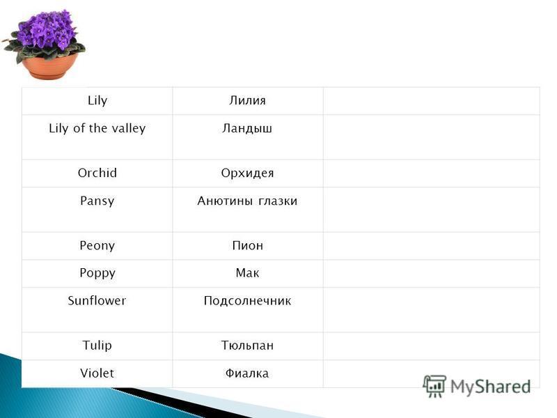 Lily Лилия Lily of the valley Ландыш Orchid Орхидея Pansy Анютины глазки Peony Пион Poppy Мак Sunflower Подсолнечник Tulip Тюльпан Violet Фиалка