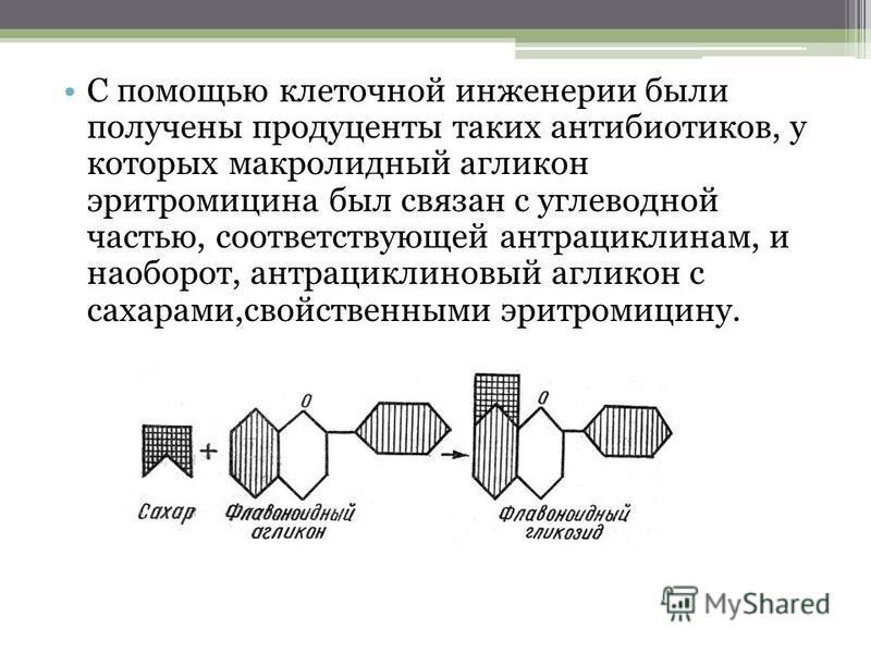 С помощью клеточной инженерии были получены продуценты таких антибиотиков, у которых макролидный агликон эритромицина был связан с углеводной частью, соответствующей антрациклинам, и наоборот, антрациклиновый агликон с сахарами,свойственными эритроми