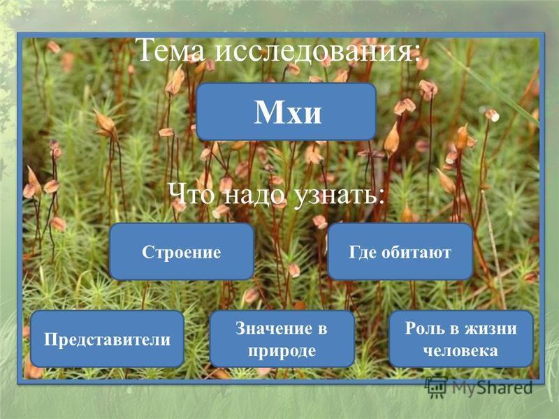 Тема исследования: Мхи Что надо узнать: Строение Представители Значение в природе Где обитают Роль в жизни человека