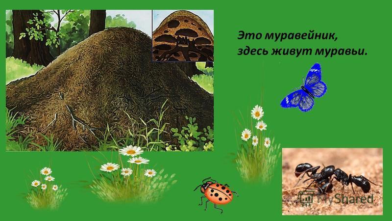Это бобровая хатка, здесь живут бобры.