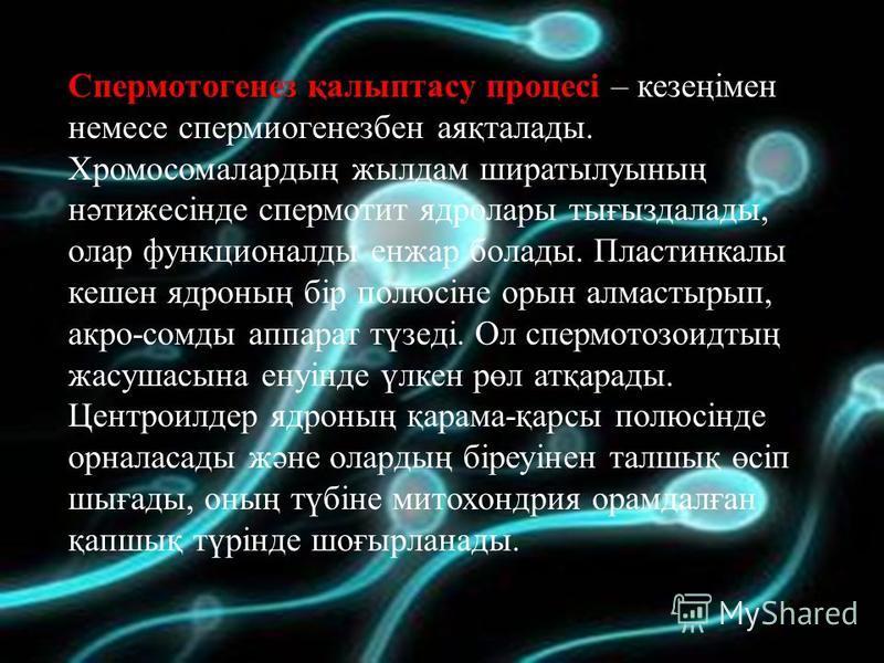Спермотогенез қалыптасу процесі Спермотогенез қалыптасу процесі – кезеңімен немесе спермиогенезбен аяқталады. Хромосомалардың жылдам ширатылуының нәтижесінде спермотит ядролары тығыздалады, олар функционалды енжар болады. Пластинкалы кешен ядроның бі