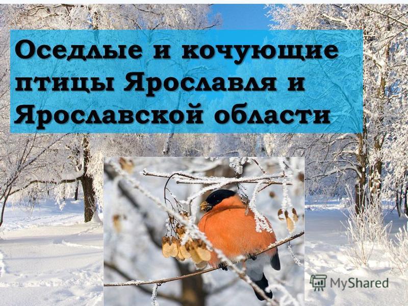 Оседлые и кочующие птицы Ярославля и Ярославской области