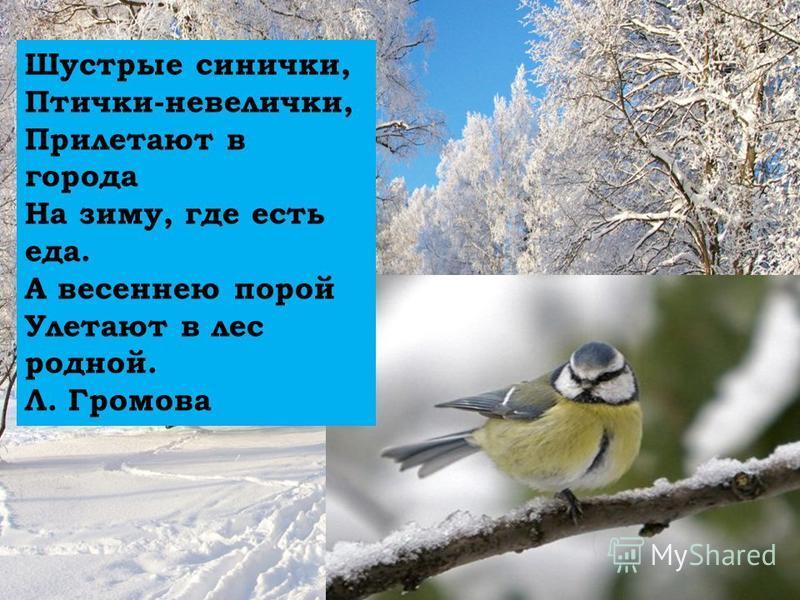 Шустрые синички, Птички-невелички, Прилетают в города На зиму, где есть еда. А весеннею порой Улетают в лес родной. Л. Громова