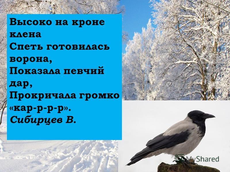 Высоко на кроне клена Спеть готовилась ворона, Показала певчий дар, Прокричала громко «кар-р-р-р». Сибирцев В.