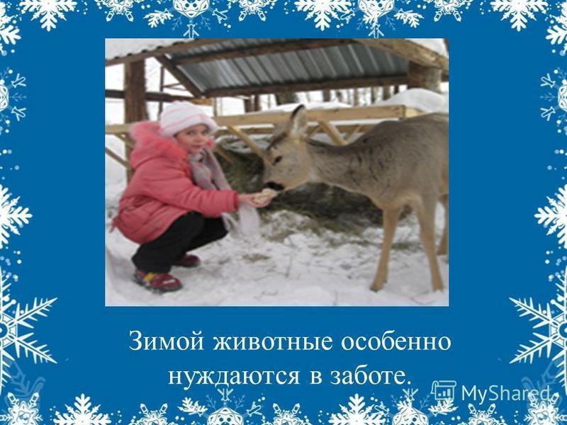 Зимой животные особенно нуждаются в заботе.