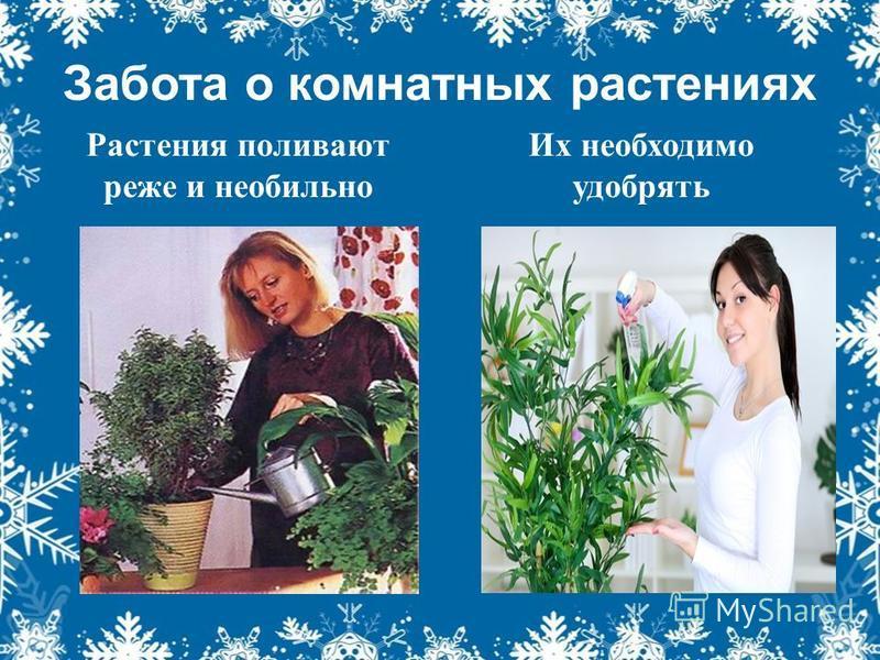 Забота о комнатных растениях Растения поливают реже и необильно Их необходимо удобрять