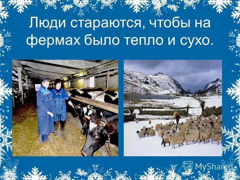 Люди стараются, чтобы на фермах было тепло и сухо.