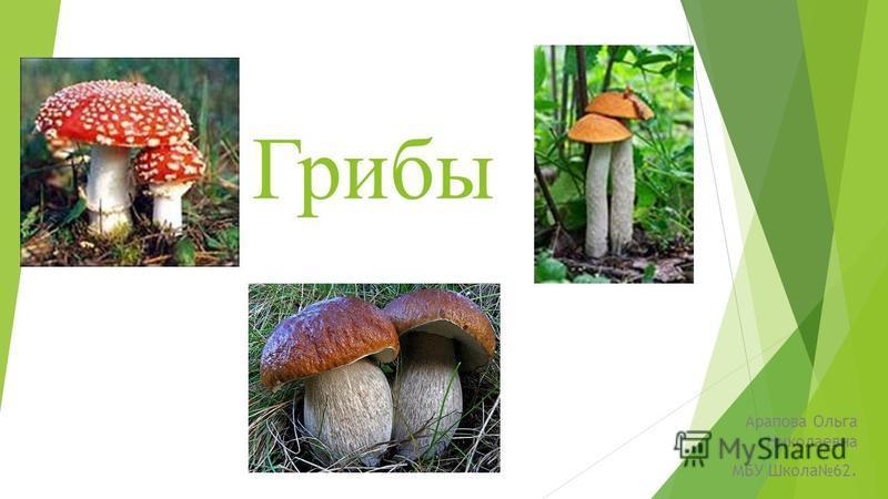 Грибы Арапова Ольга Николаевна МБУ Школа 62.