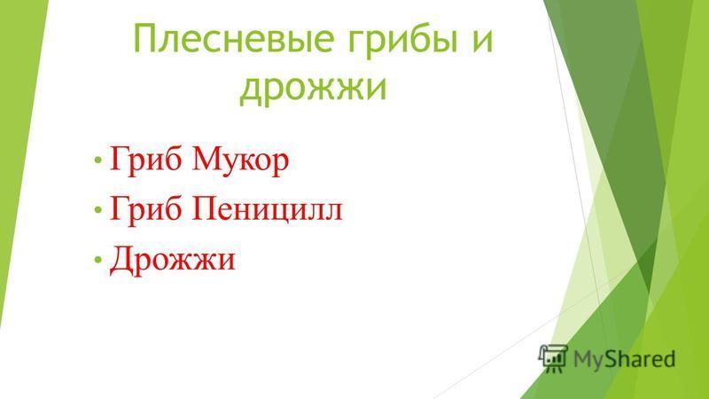 Плесневые грибы и дрожжи Гриб Мукор Гриб Пеницилл Дрожжи