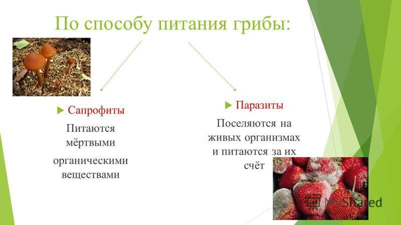 По способу питания грибы: Паразиты Поселяются на живых организмах и питаются за их счёт Сапрофиты Питаются мёртвыми органическими веществами