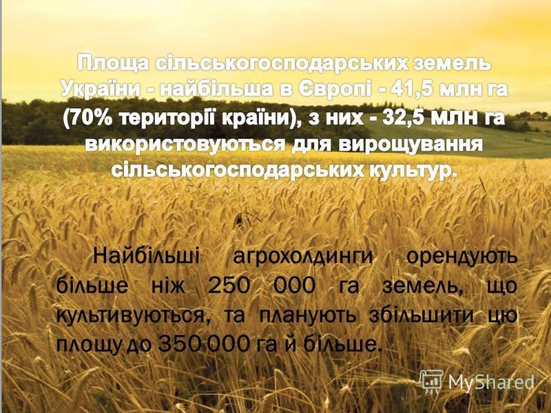Найбільші агрохолдинги орендують більше ніж 250 000 га земель, що культивуються, та планують збільшити цю площу до 350 000 га й більше.