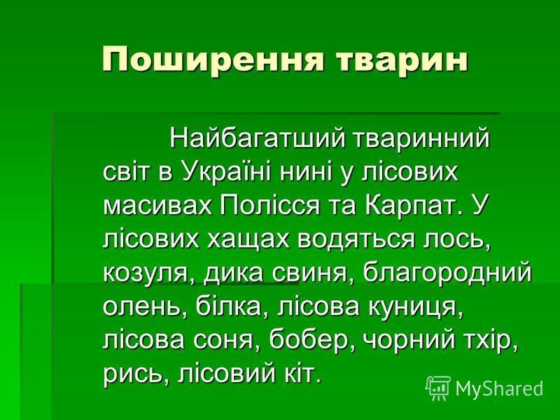 Поширення тварин Найбагатший тваринний світ в Україні нині у лісових масивах Полісся та Карпат. У лісових хащах водяться лось, козуля, дика свиня, благородний олень, білка, лісова куниця, лісова соня, бобер, чорний тхір, рись, лісовий кіт. Найбагатши