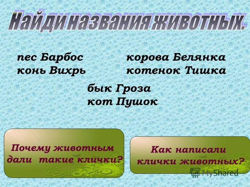 Почему животным дали такие клички? пес Барбос конь Вихрь корова Белянка котенок Тишка бык Гроза кот Пушок Как написали клички животных?