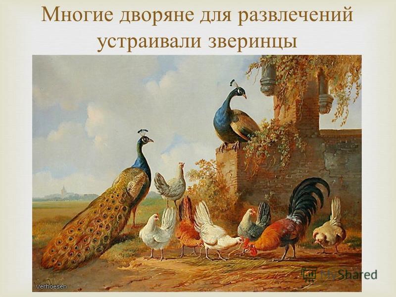 Многие дворяне для развлечений устраивали зверинцы