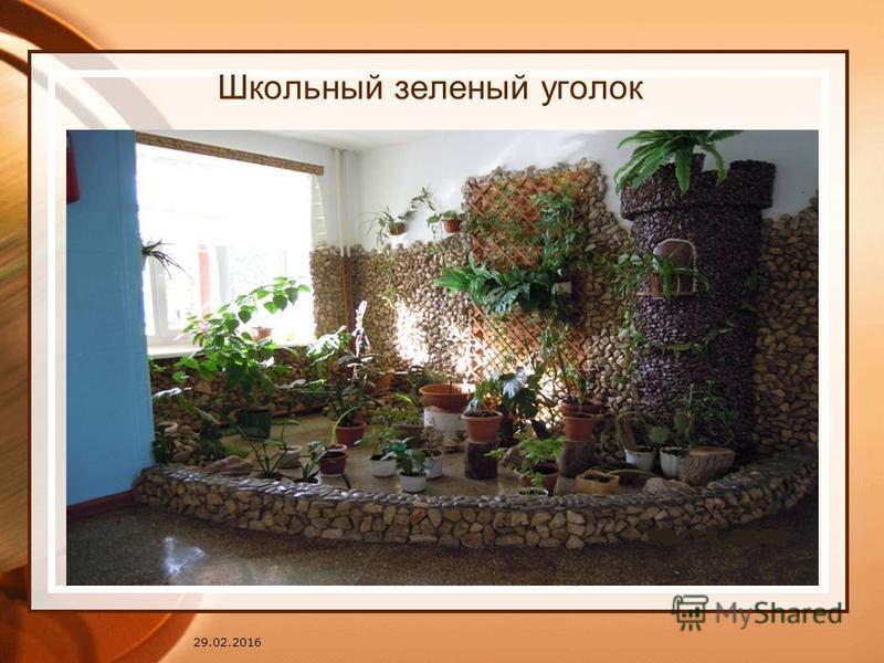 29.02.2016 Школьный зеленый уголок