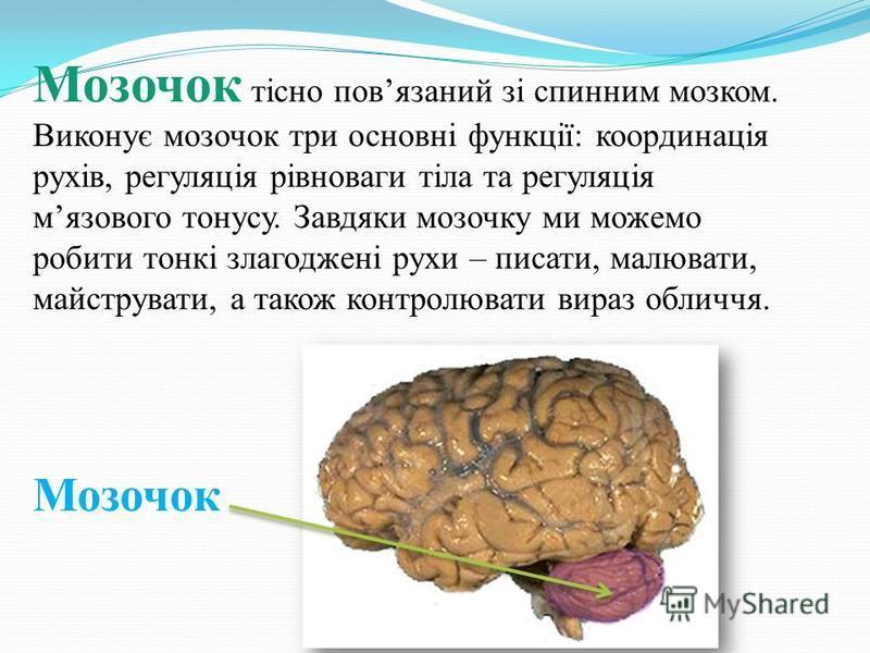 Мозочок тісно повязаний зі спинним мозком. Виконує мозочок три основні функції: координація рухів, регуляція рівноваги тіла та регуляція мязового тонусу. Завдяки мозочку ми можемо робити тонкі злагоджені рухи – писати, малювати, майструвати, а також