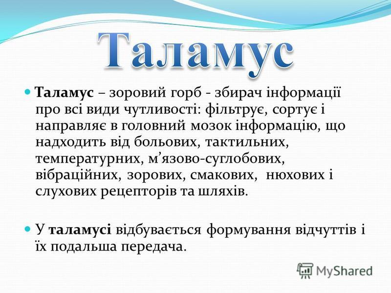 Таламус – зоровий горб - збирач інформації про всі види чутливості: фільтрує, сортує і направляє в головний мозок інформацію, що надходить від больових, тактильних, температурних, мязово-суглобових, вібраційних, зорових, смакових, нюхових і слухових