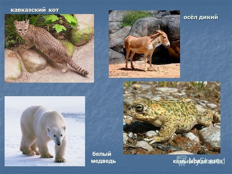 осёл дикий кавказский кот камышовая жаба белый медведь
