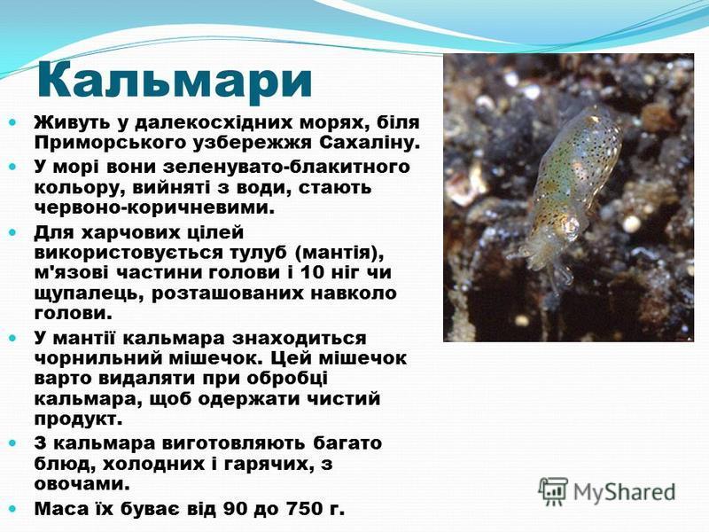 Кальмари Живуть у далекосхідних морях, біля Приморського узбережжя Сахаліну. У морі вони зеленувато-блакитного кольору, вийняті з води, стають червоно-коричневими. Для харчових цілей використовується тулуб (мантія), м'язові частини голови і 10 ніг чи