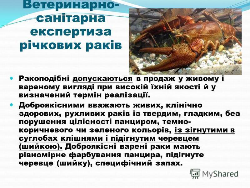 Ветеринарно- санітарна експертиза річкових раків Ракоподібні допускаються в продаж у живому і вареному вигляді при високій їхній якості й у визначений термін реалізації. Доброякісними вважають живих, клінічно здорових, рухливих раків із твердим, глад