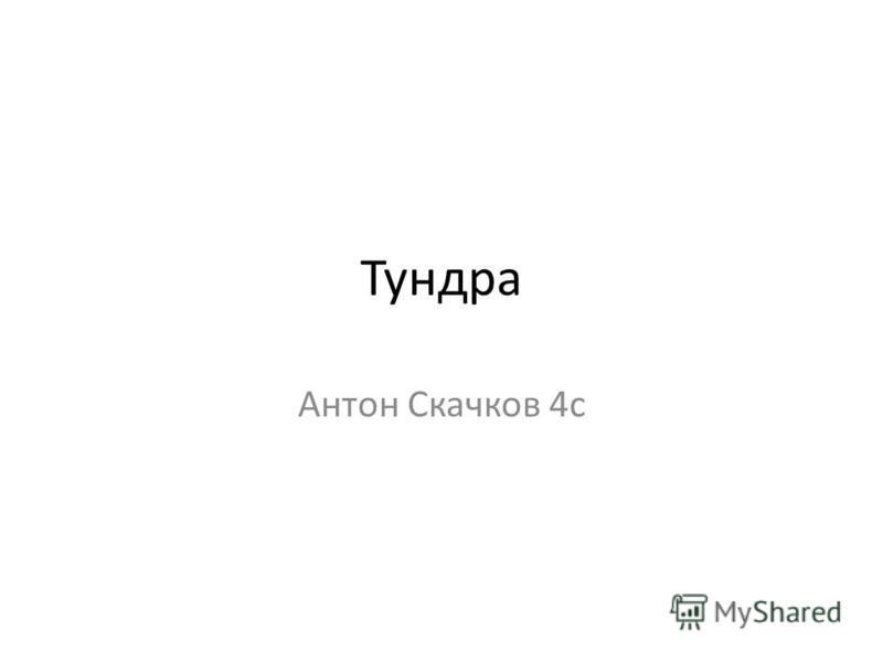 Тундра Антон Скачков 4 с