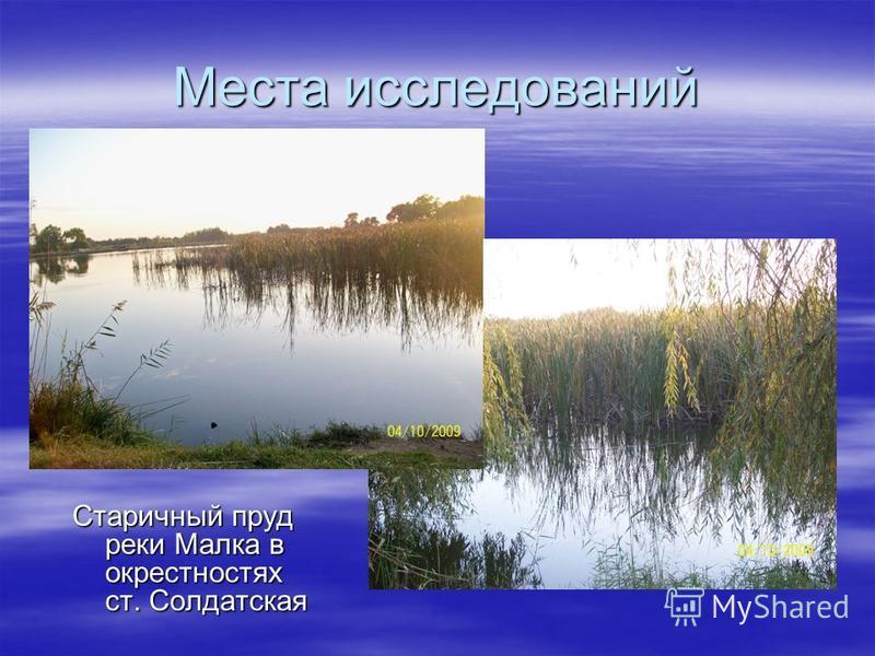 Места исследований Старичный пруд реки Малка в окрестностях ст. Солдатская