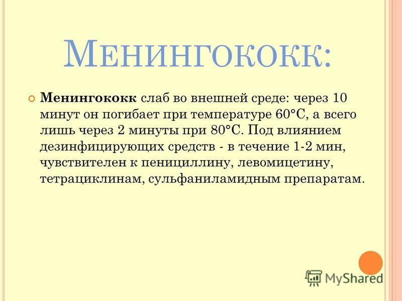 М ЕНИНГОКОКК : Менингококк слаб во внешней среде: через 10 минут он погибает при температуре 60°С, а всего лишь через 2 минуты при 80°С. Под влиянием дезинфицирующих средств - в течение 1-2 мин, чувствителен к пенициллину, левомицетину, тетрациклинам