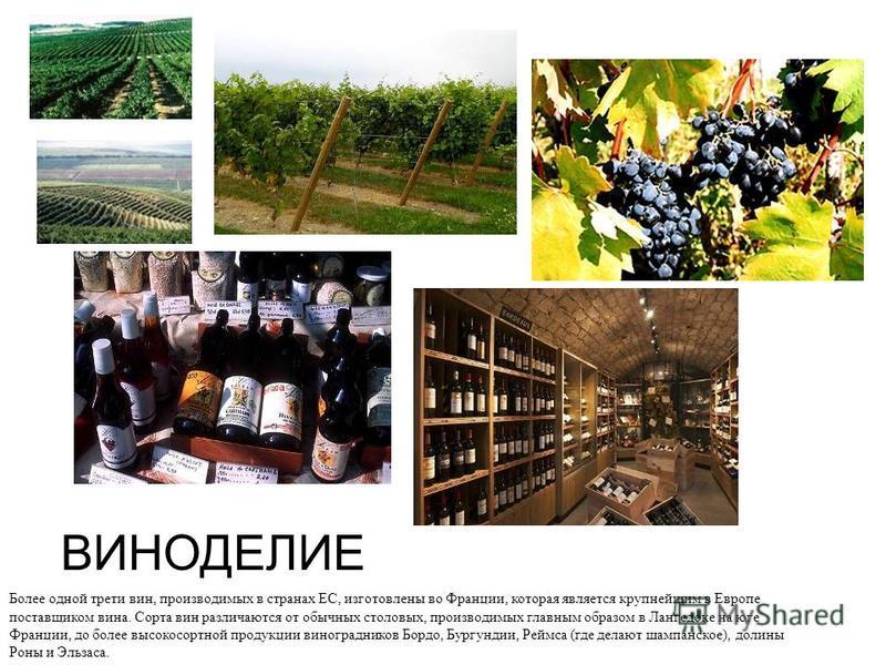 ВИНОДЕЛИЕ Более одной трети вин, производимых в странах ЕС, изготовлены во Франции, которая является крупнейшим в Европе поставщиком вина. Сорта вин различаются от обычных столовых, производимых главным образом в Лангедоке на юге Франции, до более вы