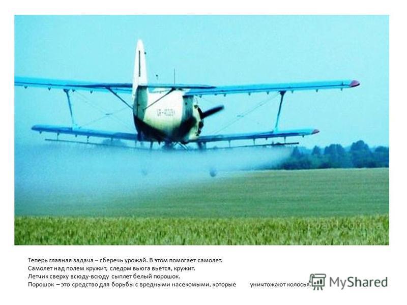 Теперь главная задача – сберечь урожай. В этом помогает самолет. Самолет над полем кружит, следом вьюга вьется, кружит. Летчик сверху всюду-всюду сыплет белый порошок. Порошок – это средство для борьбы с вредными насекомыми, которые уничтожают колось
