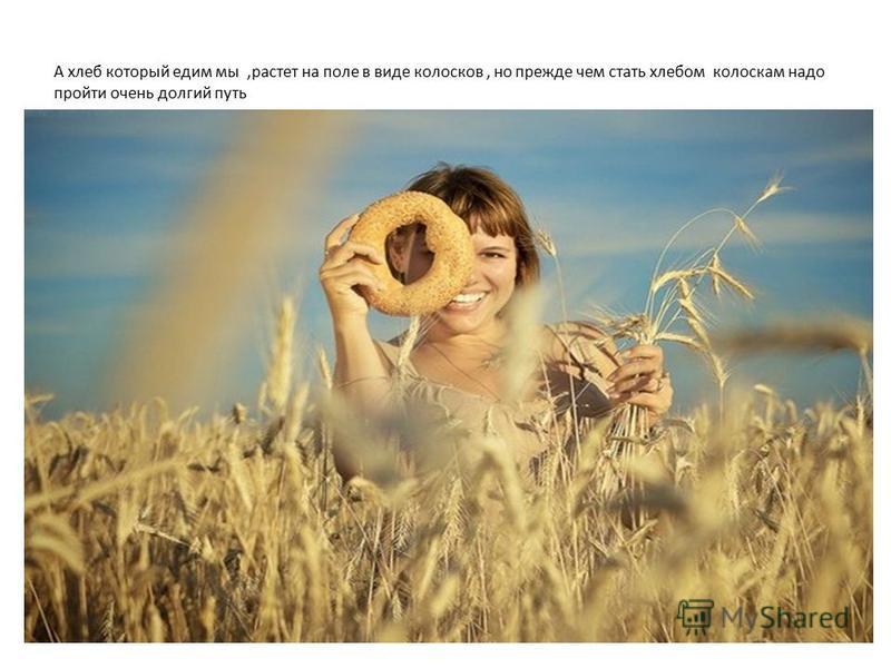 А хлеб который едим мы,растет на поле в виде колосков, но прежде чем стать хлебом колоскам надо пройти очень долгий путь