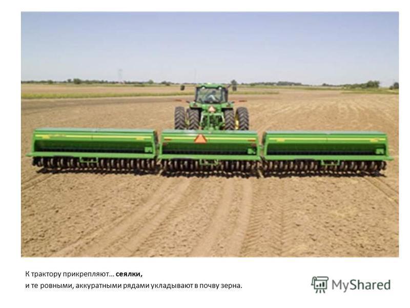 К трактору прикрепляют… сеялки, и те ровными, аккуратными рядами укладывают в почву зерна.