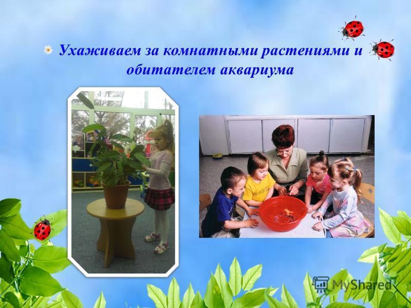 Ухаживаем за комнатными растениями и обитателем аквариума