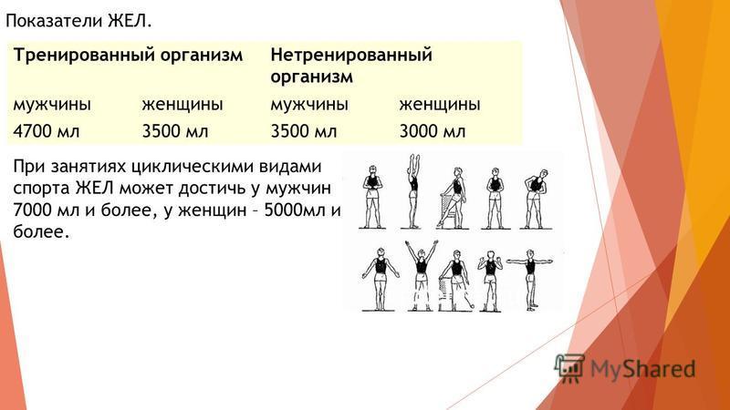 Тренированный организм Нетренированный организм мужчины женщины мужчины женщины 4700 мл 3500 мл 3000 мл Показатели ЖЕЛ. При занятиях циклическими видами спорта ЖЕЛ может достичь у мужчин 7000 мл и более, у женщин – 5000 мл и более.
