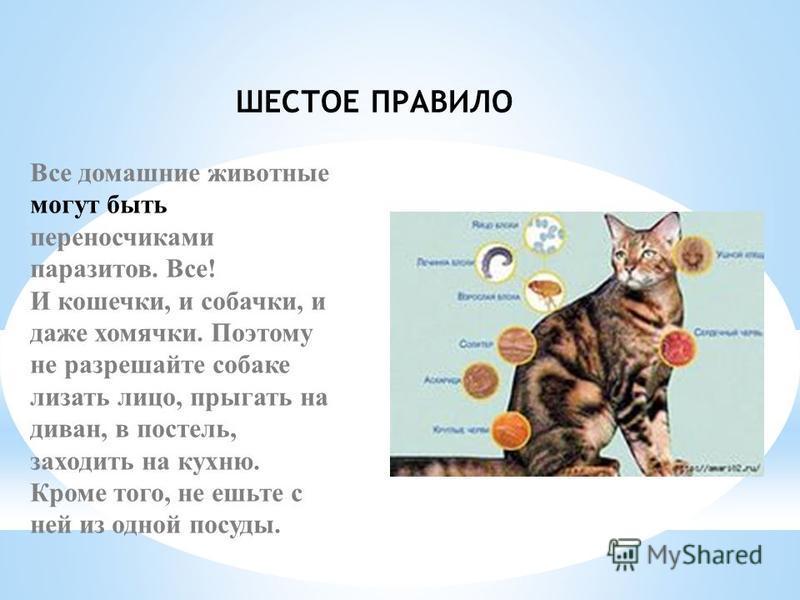 ШЕСТОЕ ПРАВИЛО Все домашние животные могут быть переносчиками паразитов. Все! И кошечки, и собачки, и даже хомячки. Поэтому не разрешайте собаке лизать лицо, прыгать на диван, в постель, заходить на кухню. Кроме того, не ешьте с ней из одной посуды.