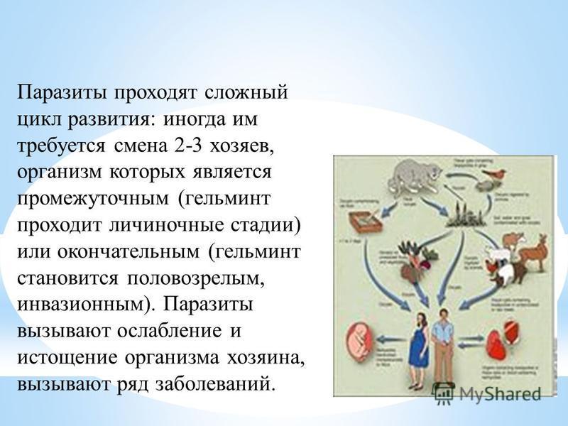 Паразиты проходят сложный цикл развития: иногда им требуется смена 2-3 хозяев, организм которых является промежуточным (гельминт проходит личиночные стадии) или окончательным (гельминт становится половозрелым, инвазионным). Паразиты вызывают ослаблен