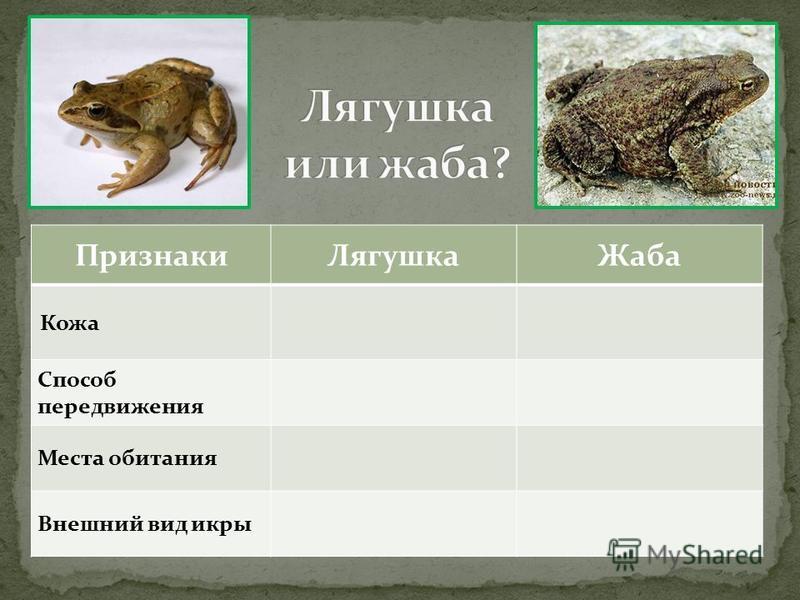 Признаки Лягушка Жаба Кожа Способ передвижения Места обитания Внешний вид икры