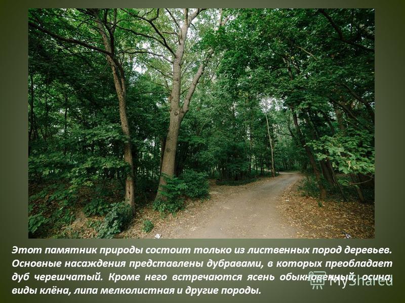 Этот памятник природы состоит только из лиственных пород деревьев. Основные насаждения представлены дубравами, в которых преобладает дуб черешчатый. Кроме него встречаются ясень обыкновенный, осина, виды клёна, липа мелколистная и другие породы.