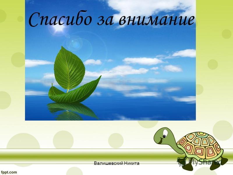 Спасибо за внимание Валишевский Никита 10