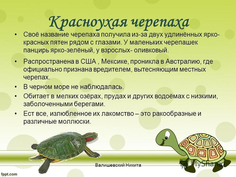 Своё название черепаха получила из-за двух удлинённых ярко- красных пятен рядом с глазами. У маленьких черепашек панцирь ярко-зелёный, у взрослых- оливковый. Распространена в США, Мексике, проникла в Австралию, где официально признана вредителем, выт