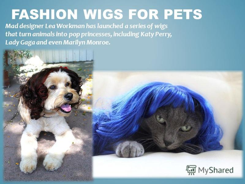FASHION WIGS FOR PETS Mad designer Lea Workman has launched a series of wigs that turn animals into pop princesses, including Katy Perry, Lady Gaga and even Marilyn Monroe.