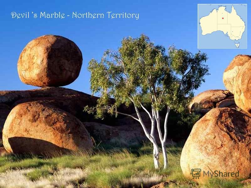 Spinifex - végétation de l Outback