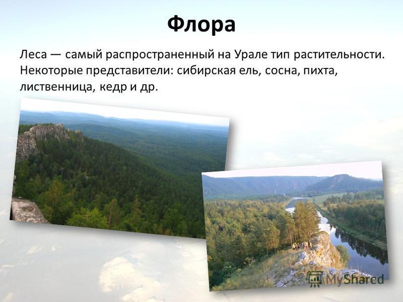 Флора Леса самый распространенный на Урале тип растительности. Некоторые представители: сибирская ель, сосна, пихта, лиственница, кедр и др.